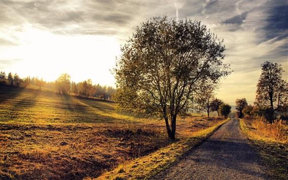 Обои Деревья, трава, склон, тропинка, облака, тень