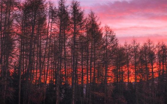 Fond d'écran Arbres, ciel rouge, coucher de soleil
