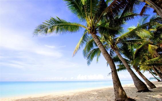 배경 화면 열대, 야자, 해변, 바다, 자연