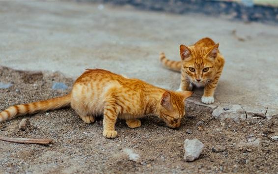 Papéis de Parede Dois gatinhos listrados bonitos