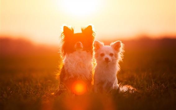 Wallpaper Two dogs, friends, under sun, glare