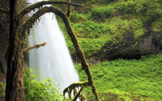 Wallpaper Waterfall, moss, plants