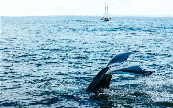 Wallpaper Whale, tail, predator, sea, water, splash