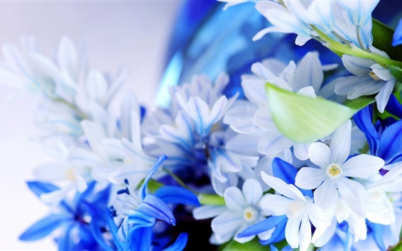 Wallpaper White and blue flowers