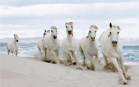 Papéis de Parede Cavalos brancos correndo, areias, mar