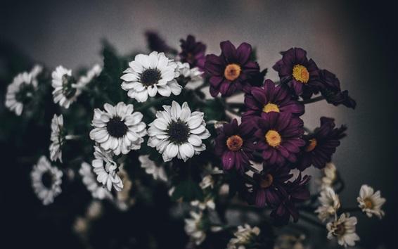 Papéis de Parede Flores roxas brancas, ramalhete