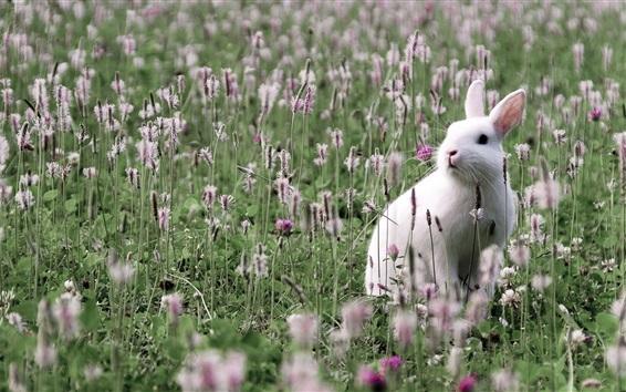 壁紙 野生の白いウサギ