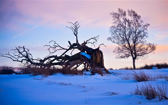 Обои Зима, снег, деревья, коряги, сумерки