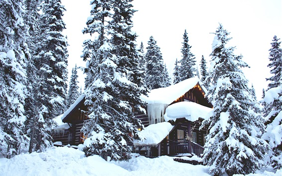 Wallpaper Winter, thick snow, trees, houses