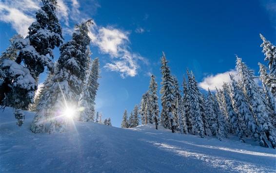 Fondos de pantalla Invierno, nieve gruesa, árboles, sol