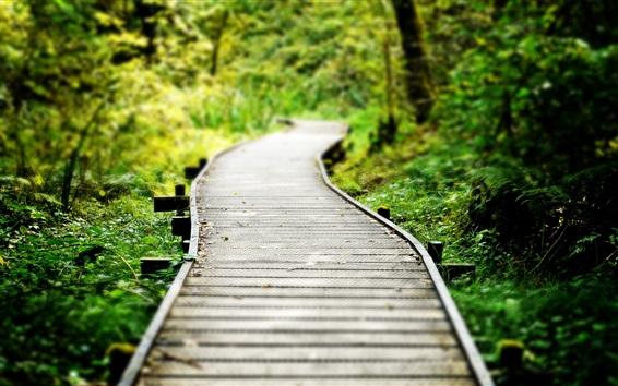 Wallpaper Wood path, grass, blurry