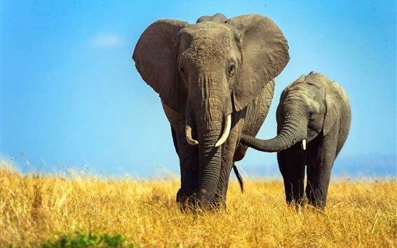 Fondos de pantalla África, elefantes, cachorro