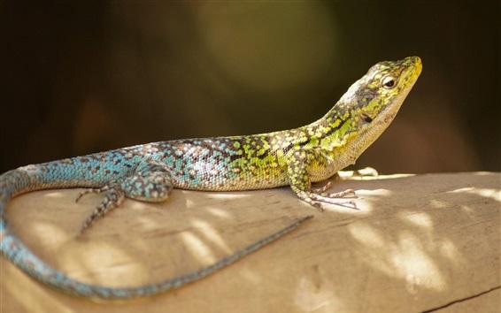 Wallpaper Amphibian, lizard, scales, rest