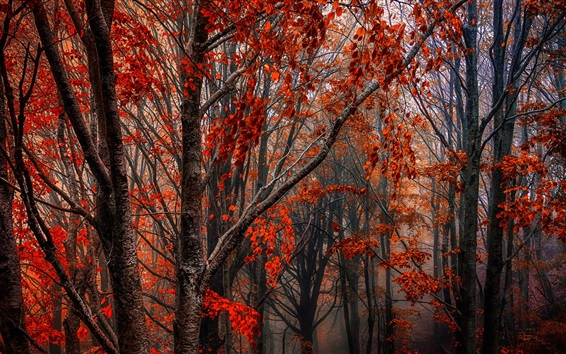 Wallpaper Autumn, forest, trees, red leaves, fog