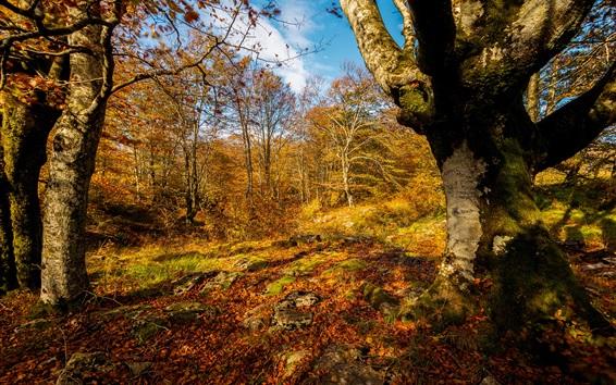 Обои Осень, лес, деревья, желтый