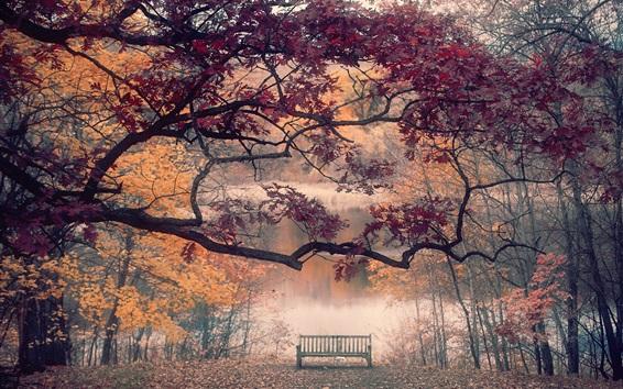 Papéis de Parede Outono, maple trees, folhas, banco, rio