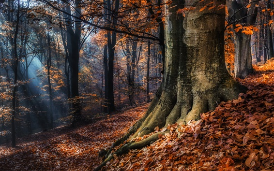 Wallpaper Autumn nature forest, red leaves
