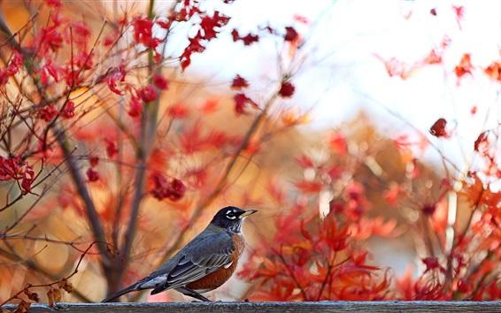 Papéis de Parede Outono, fundo das árvores, pássaro