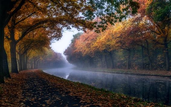 Wallpaper Autumn, trees, foliage, river, haze