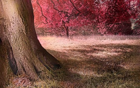 Wallpaper Autumn, trees, grass, nature scenery