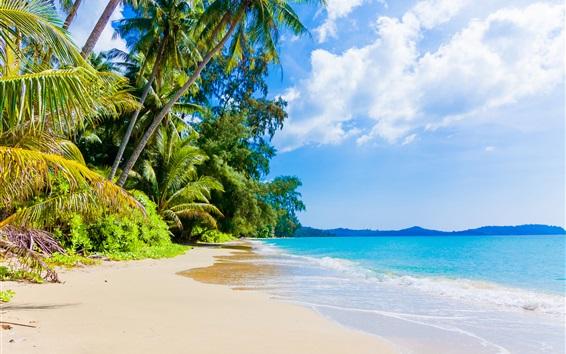 Wallpaper Beach, palm trees, blue sea, sky, clouds, tropical