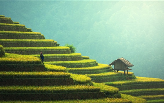 Wallpaper Beautiful rice terraces, China, countryside, greens, hut