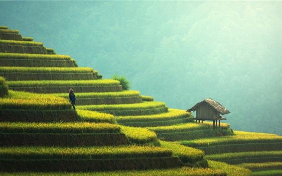 Papéis de Parede Lindos terraços de arroz, China, campo, verdes, cabana