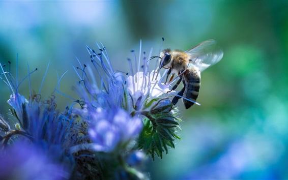 Papéis de Parede Flores de abelha e azul, fotografia de insetos