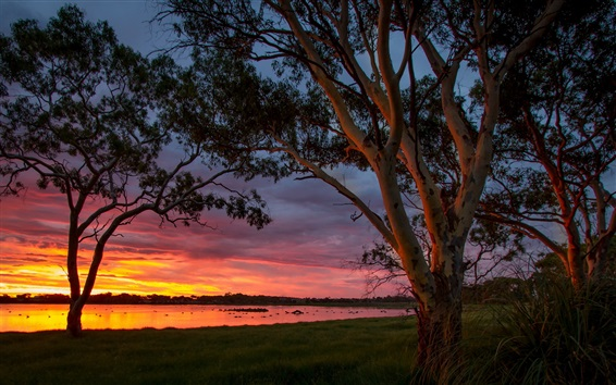 Wallpaper Big Swamp, Australia, water, trees, sunset