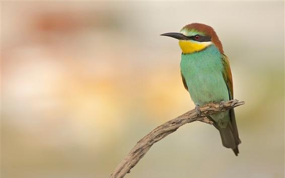 Fondos de pantalla Fotografía de aves, ramitas, fondo borroso