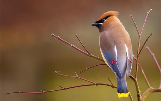 Fond d'écran Vue arrière de l'oiseau, branches, arbre