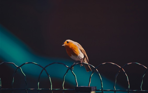 Papéis de Parede Pássaro, cerca de arame