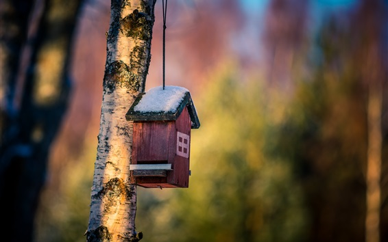 배경 화면 새 집, 눈, 나무