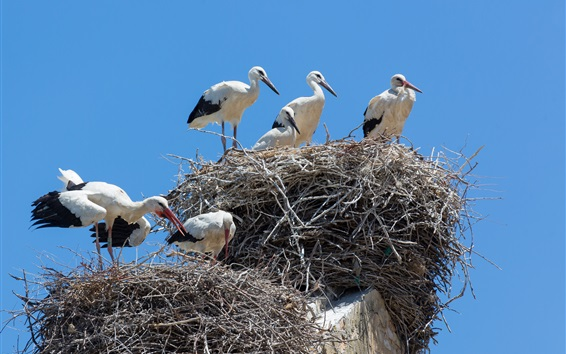 Обои Птицы, кран, гнездо