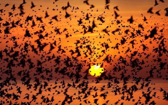 Fond d'écran Le ciel des oiseaux, le coucher du soleil