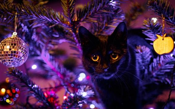 Обои Черная кошка, глаза, свет, праздник