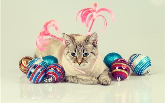 Papéis de Parede Olhos azuis, gato e bolas coloridas