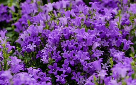 Fond d'écran Blue purple bells flowers