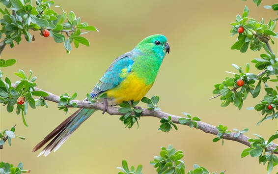 Обои Голубой попугай