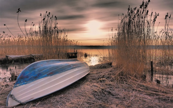 Wallpaper Boat, reeds, lake, sunset