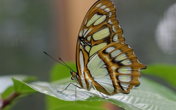 Wallpaper Butterfly photography, wings