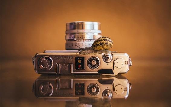 Fond d'écran Caméra et escargot