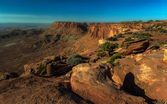 Wallpaper Canyonlands National Park, USA, mountains, trees