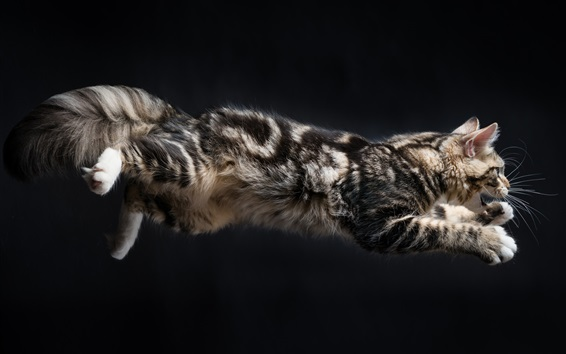 Wallpaper Cat jumping moment, black background