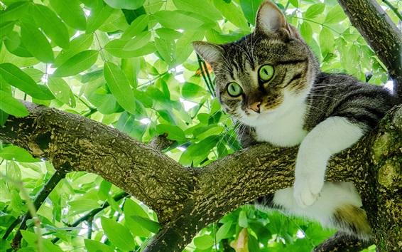 Fondos de pantalla Gato en árbol, follaje verde