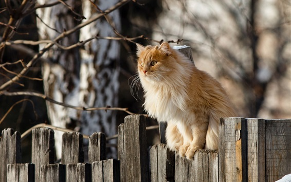 Wallpaper Cat standing on fence top