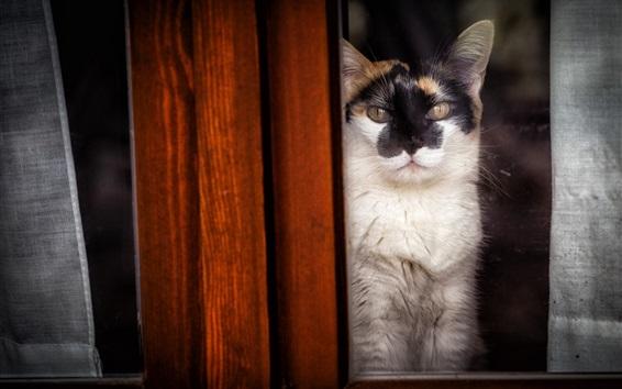 Wallpaper Cat, wood, window
