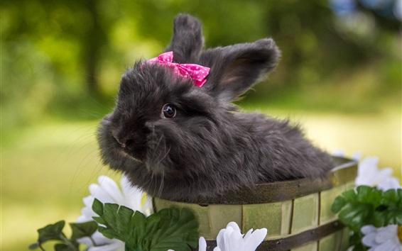 Fondos de pantalla Cute conejo negro, mascotas