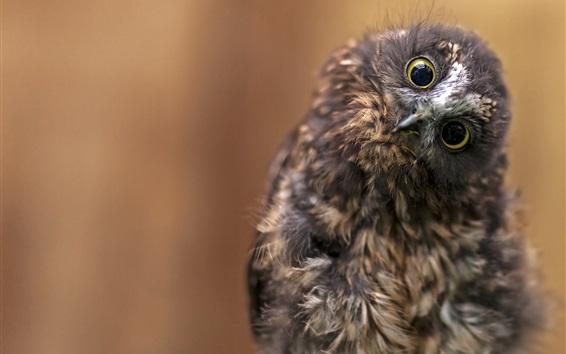 Papéis de Parede Linda fotografia de coruja, cabeça, olhos, aparência