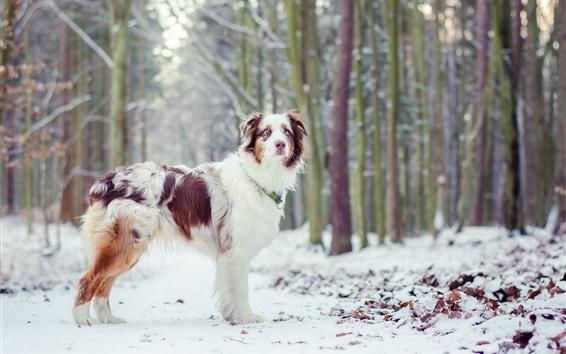 Wallpaper Dog, winter, trees, snow